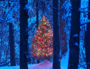 christmas_tree_322