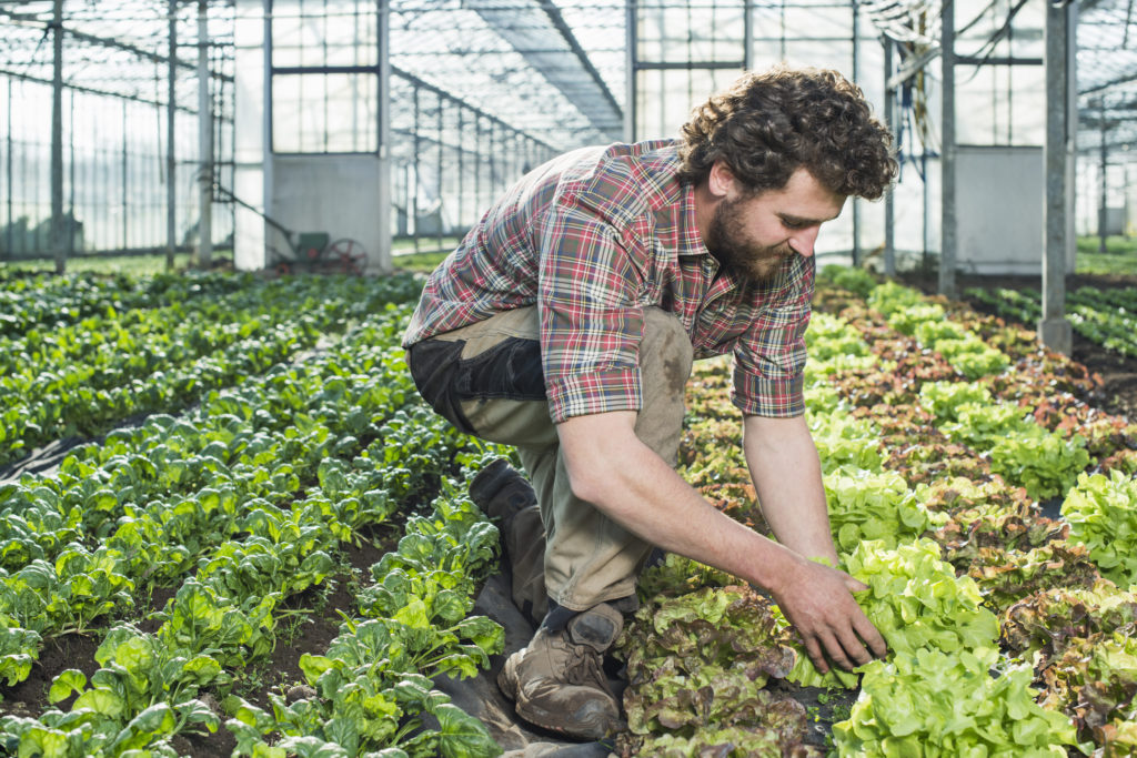 Man-working-in-farm-greenhouse