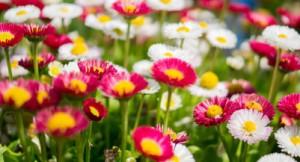 flowers garden_401