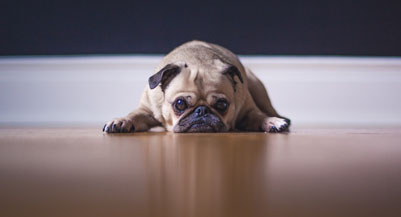 divorce advice sad dog stolen dog family dog