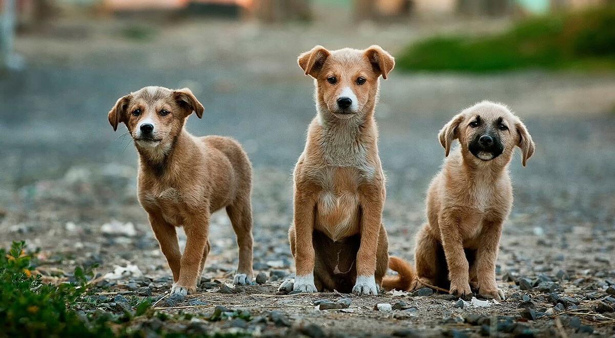 puppies-1200