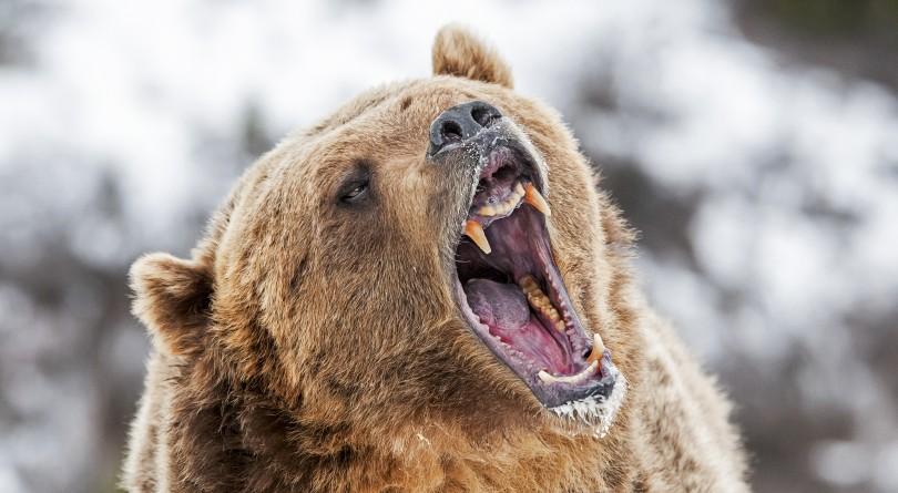 A Bear Market (Shutterstock)